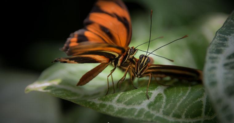 Butterflies at Calgary Zoo